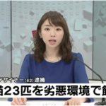 堀口妙子の顔画像、Facebookは?自宅で23匹もの猫を飼った結末